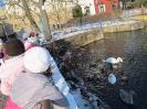 2016-01-20 - Krmení vodního ptactva